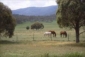 We live & work near the Snowy Mountains, with horses at our door