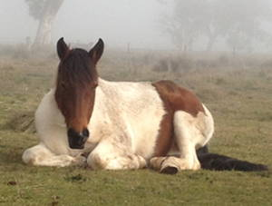 Relax like our paint mare Bella, and let SuttonNet do the work!